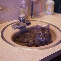 Young Leo in the sink