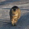 Leo on patrol
